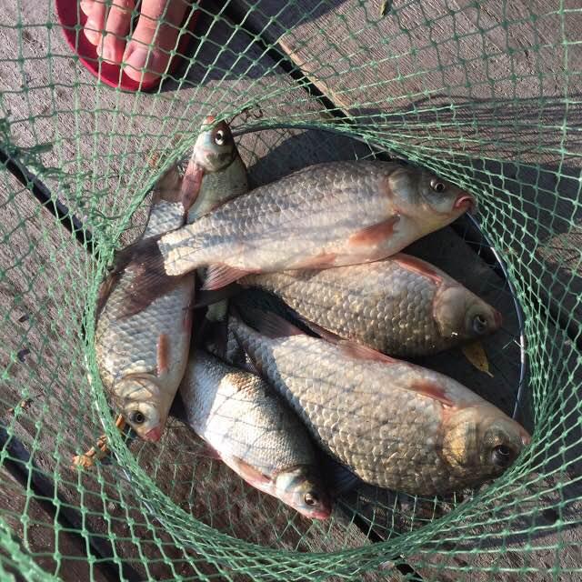 Рыбалка с помоста